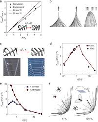 a effect of geneously increasing thread diameters on pdms web strength we take the initial structure of ds 0 200 μm and dr 0 250 μm and keep