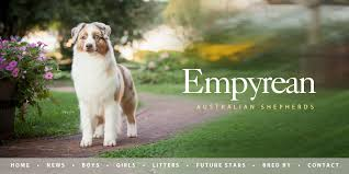 mdr1 australian shepherd empyrean australian shepherds vivian
