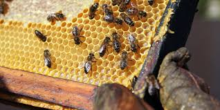 32 free beekeeping resources the self reliance catalog