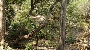 Tropical Dry Forest Animals And Plants - central deccan plateau dry deciduous forests wikipedia