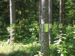 clear cut a mirrored forest installation by joakim kaminsky and