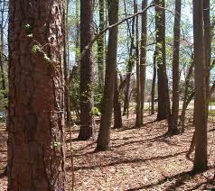 Pennsylvania vegetaion images Vegetation of virginia jpg