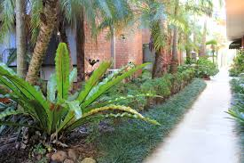tropical garden ideas tropical garden ideas nz with ideas picture 100714 iepbolt