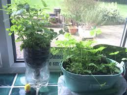Diy Self Watering Herb Garden Diy Self Watering Planter Making And Cultivating