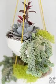 the 25 best hanging succulents ideas on pinterest succulent