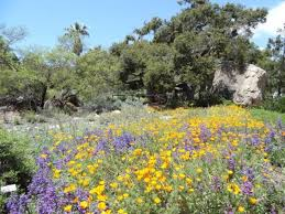 Santa Barbara Botanic Gardens Festivals And Events In Ventura County