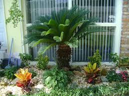 Front Yard Tree Landscaping Ideas King Palm Tree Landscaping Inspiring Palm Tree Landscaping Ideas