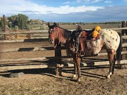 Montana How Far Can A Horse Travel In A Day images Little bighorn horseback tours horse clinic bridger mt jpg