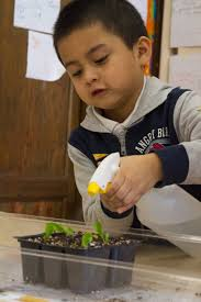 greenbelt native plant center kindergarteners help grow a wild brooklyn the national wildlife
