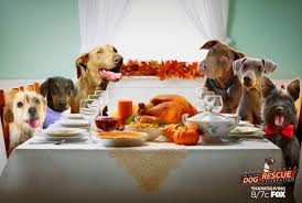 thanksgiving tv goes to the dogs i still dogs