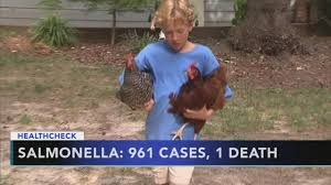 backyard chicken coops to blame for rise in salmonella 6abc com