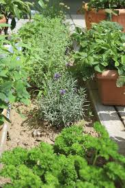 general herb care articles gardening know how