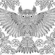Owl Coloring Pages For Adults Give The Best Coloring Pages Gif Page Owl Color Pages
