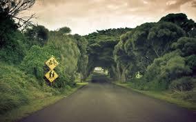 beautiful road u0026 trees wallpapers beautiful road u0026 trees stock