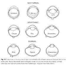 eye design book biological eye design eyech2 abc html