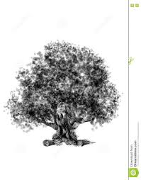 White Oak Tree Drawing Drawing Old Tree Oak On A White Background Stock Illustration