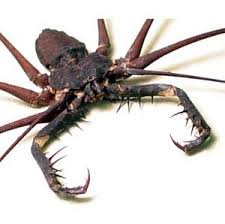 Mr Wilson S Cabinet Of Wonder Giant Spiked Cave Spider As A Wall Accent Boing Boing