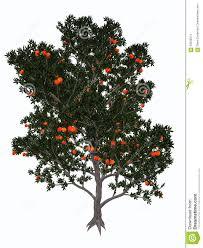 pomegranate tree 3d render stock illustration image 59205874