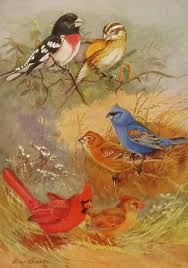 vintage 1930s red cardinal bird print illinois indiana kentucky