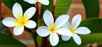 summer flowering plants flower power