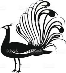 black and white illustration of a peacock stock vector art