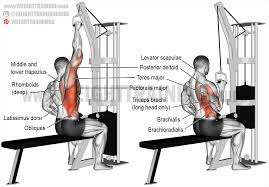 one arm lat pull down exercise guide and video weight training guide