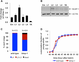 blimp 1 blmp 1 and metastasis associated protein regulate stress
