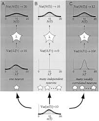 the variable discharge of cortical neurons implications for