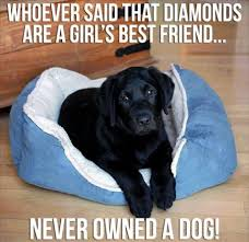 Black Lab Meme - simple 5661 best labrador retrievers images on pinterest wallpaper