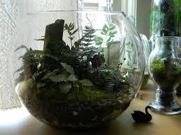 best 25 terrarium containers ideas on pinterest glass terrarium
