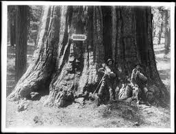 file two stand at the foot of a big tree in mariposa grove in
