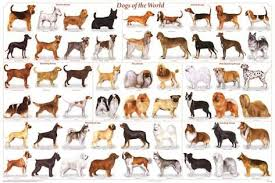 periodic table of dogs dogs of the world educational science chart poster prints