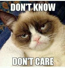 142 best the wonderful grumpy cat images on pinterest grumpy cat