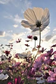 best 25 flowers ideas on pinterest pretty flowers beautiful