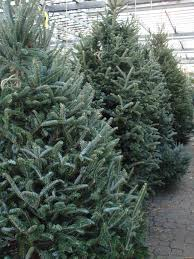 catchy collections of christmas tree forest catchy homes