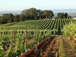 Valley Oregon Weekend Trip Wine Getaway In Oregon S Willamette Valley