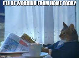 Working Cat Meme - image result for cat working from home meme cat memes pinterest