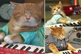Cat Playing Piano Meme - bento the keyboard cat dies as youtube mourns feline star who shot