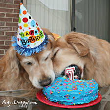 Birthday Cake Dog Meme - this is the way you eat a birthday cake goldens love