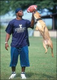 Michael Michael O U0027keefe by Michael Vick Dog 54 Dogs Get Vick Timized Michael Vick Dog