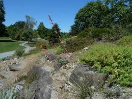 Botanical Gardens Ubc by Rare Plants In Alpine Garden Ubc Botanical Garden Forums