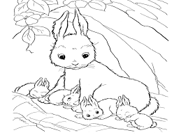 real bunny coloring pages download and print for free