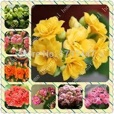flowers free shipping free shipping 240pcs 8kind each 30pcs kalanchoe flower seeds strange