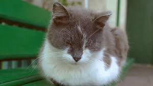 sad cat sits on a bench sleeping slow motion video stock video