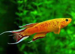 marine fish export live ornamental exporter invertebrates