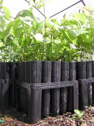 Large Tree Planters by Go Native Tree Farm Ordering And Shipping