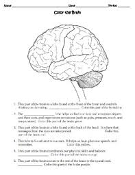 human body the nervous system worksheet by sweet d tpt