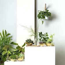 plant wall hangers indoor indoor wall planter wall hanging plant home wall hanging planters uk