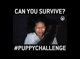 Challenge Unilad The Puppy Challenge