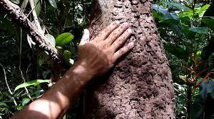 Best Plant For Mosquito Repellent Eu De Ant